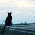 200年間主人を待ち続けた猫、安らかに眠る