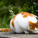 史上初の「絵画魔法化」で絵画猫の大量召喚が発生