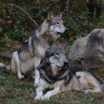 今年もワーウルフ族主催で『秋のリアル人狼ゲーム』開催
